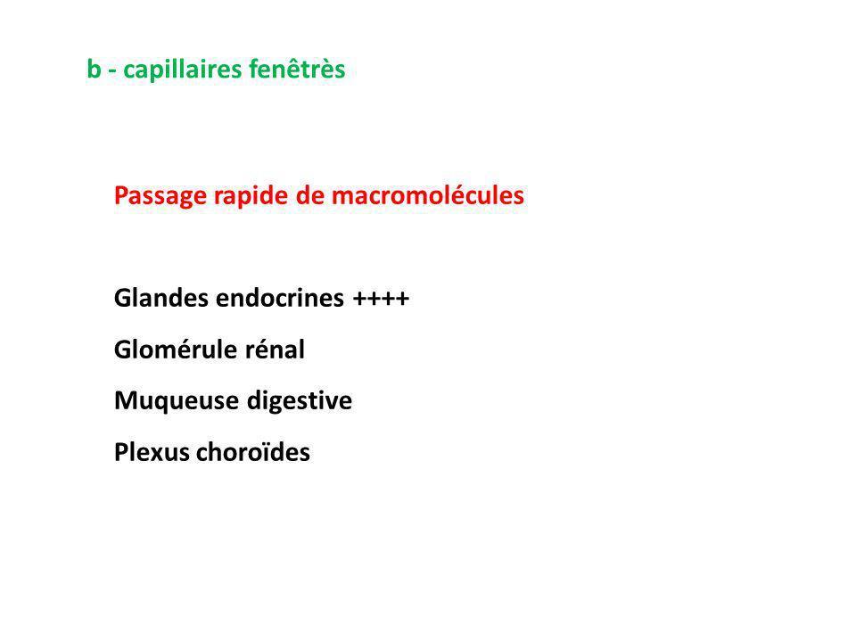 b - capillaires fenêtrès