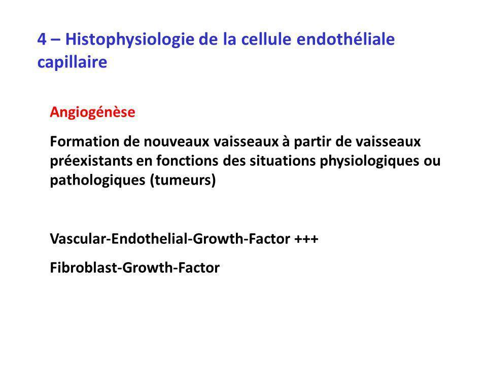 4 – Histophysiologie de la cellule endothéliale capillaire