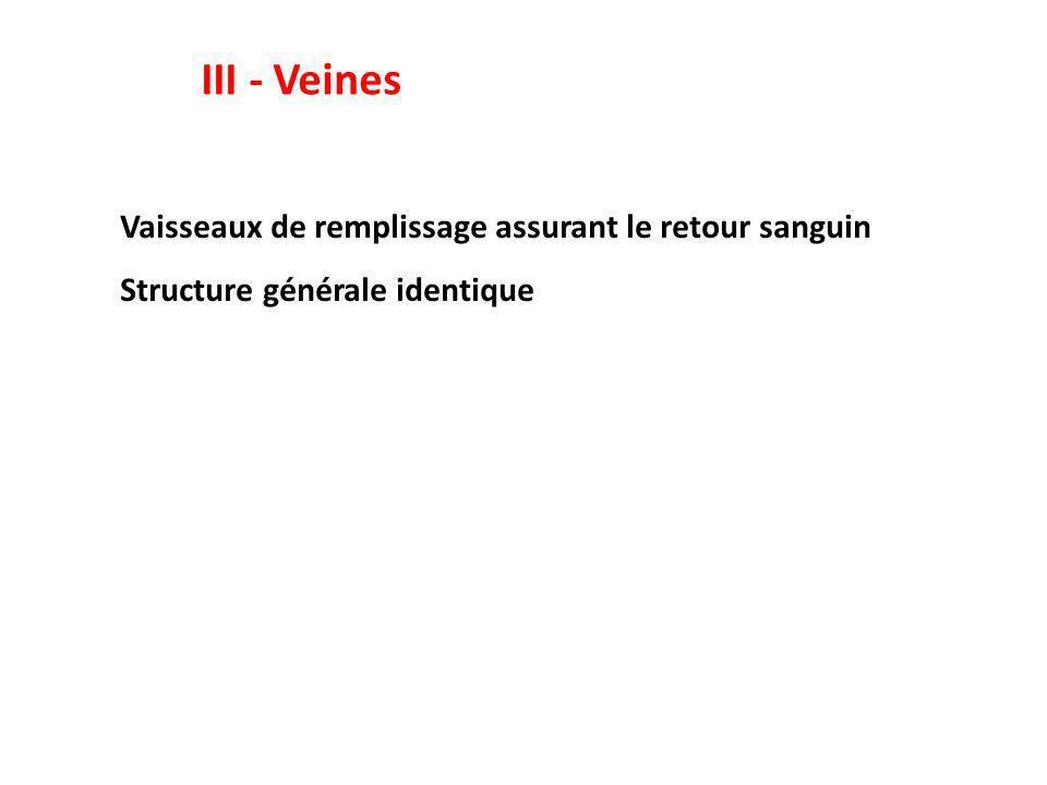 III - Veines Vaisseaux de remplissage assurant le retour sanguin