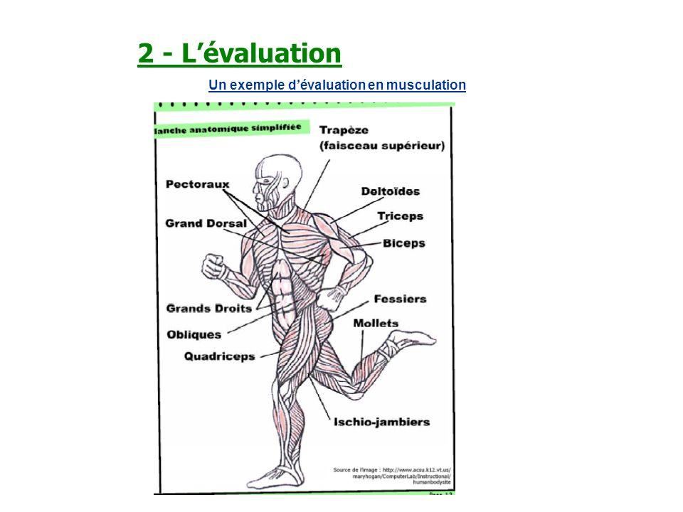 2 - L'évaluation Un exemple d'évaluation en musculation