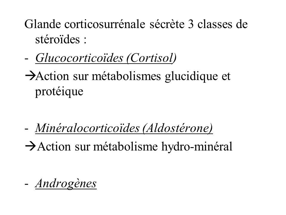 Glande corticosurrénale sécrète 3 classes de stéroïdes :