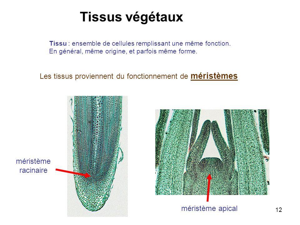 Tissus végétaux Les tissus proviennent du fonctionnement de méristèmes