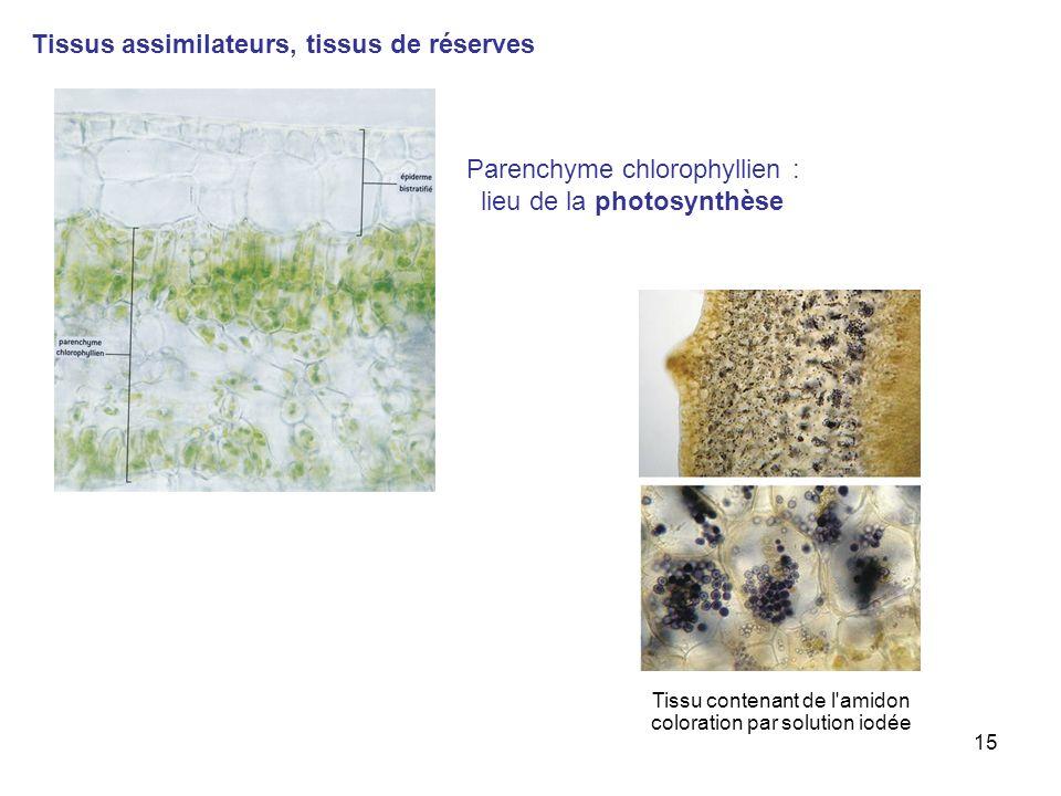 Tissus assimilateurs, tissus de réserves