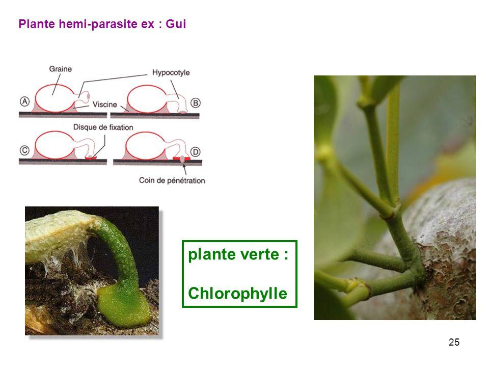 Plante hemi-parasite ex : Gui