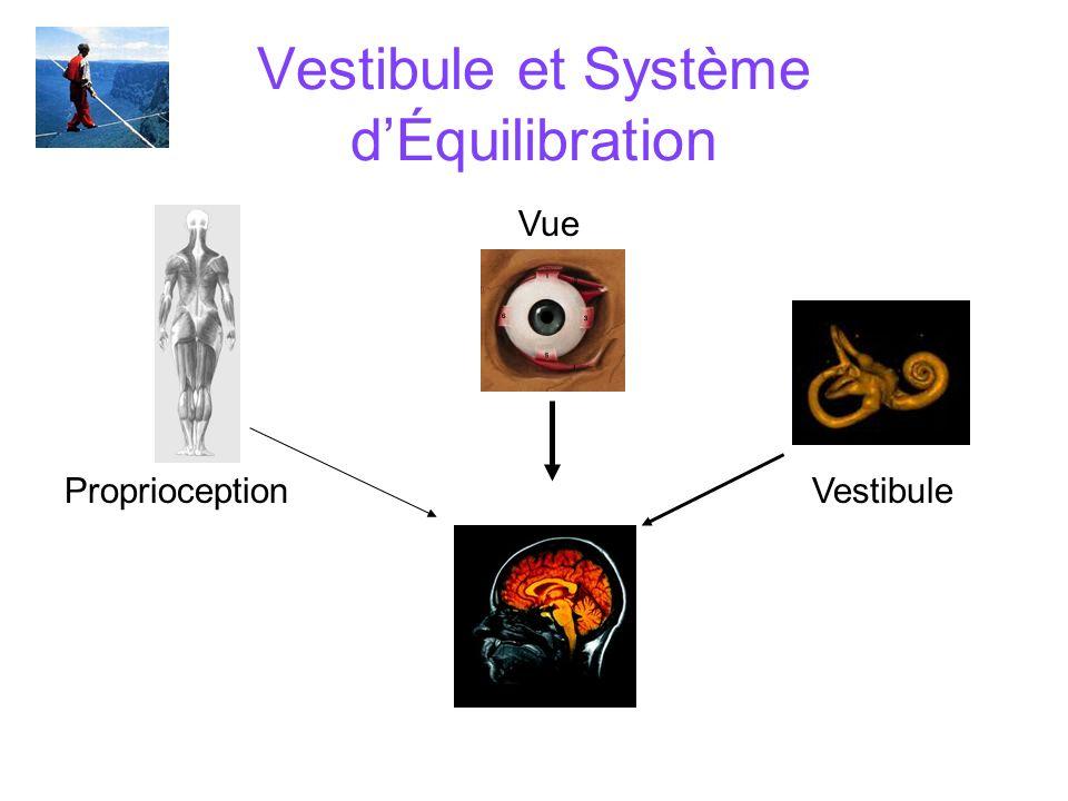 Vestibule et Système d'Équilibration
