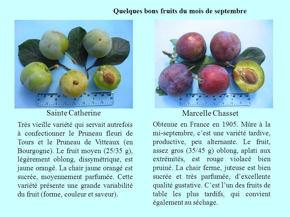 Quelques bons fruits du mois de septembre