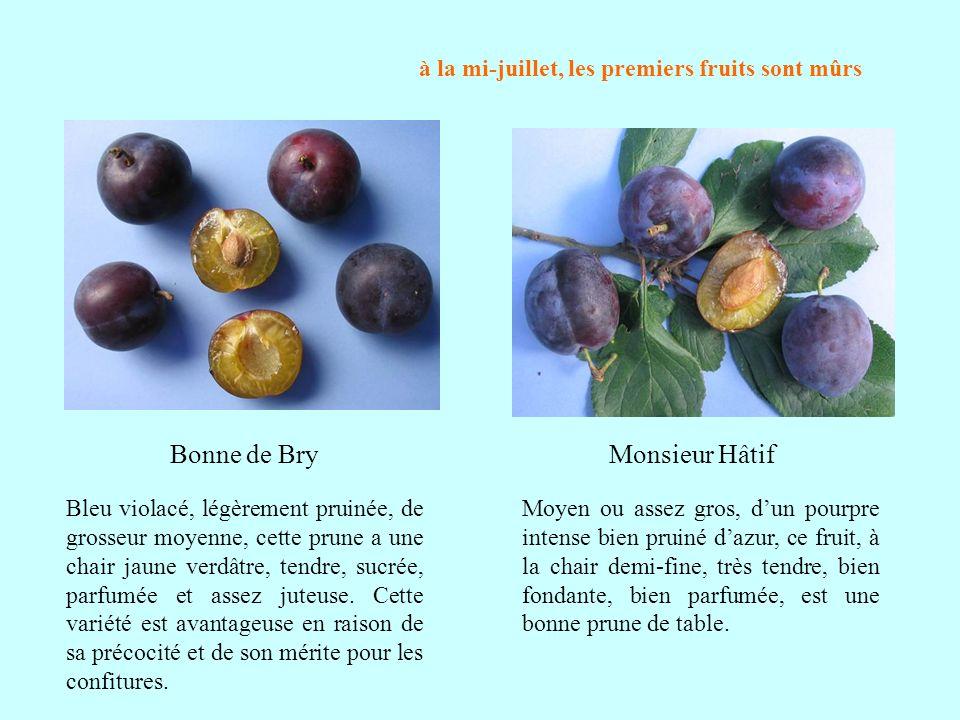 à la mi-juillet, les premiers fruits sont mûrs