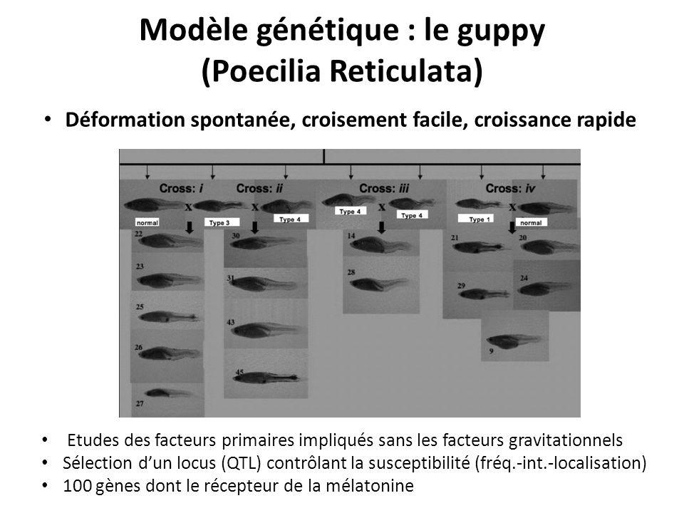 Modèle génétique : le guppy (Poecilia Reticulata)
