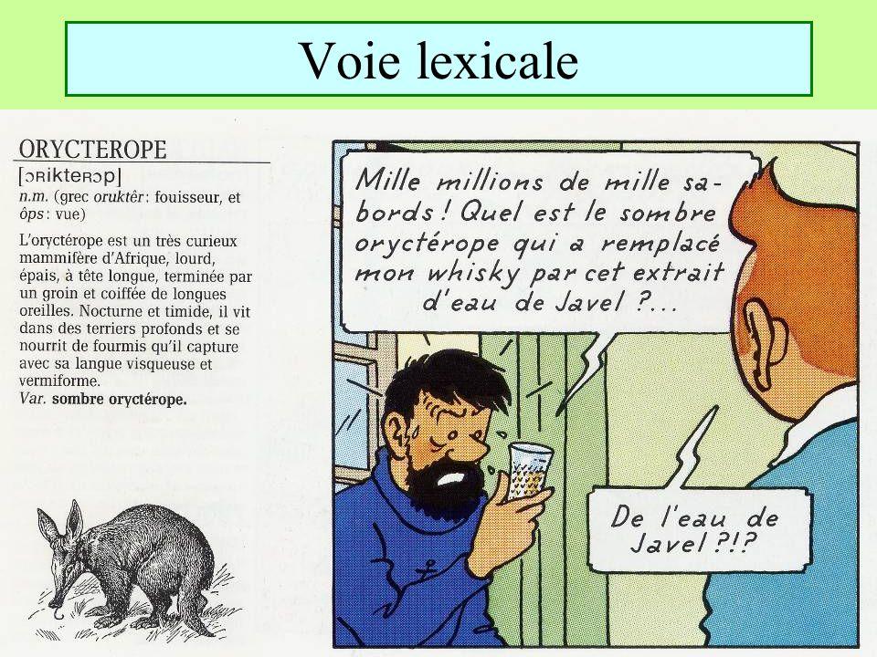 Voie lexicale