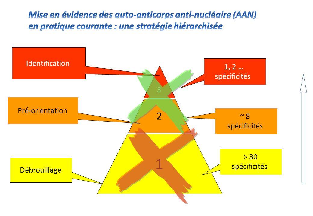 Mise en évidence des auto-anticorps anti-nucléaire (AAN) en pratique courante : une stratégie hiérarchisée