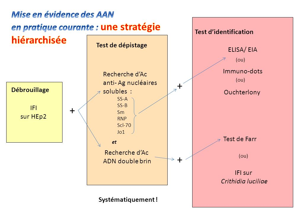 Mise en évidence des AAN en pratique courante : une stratégie hiérarchisée