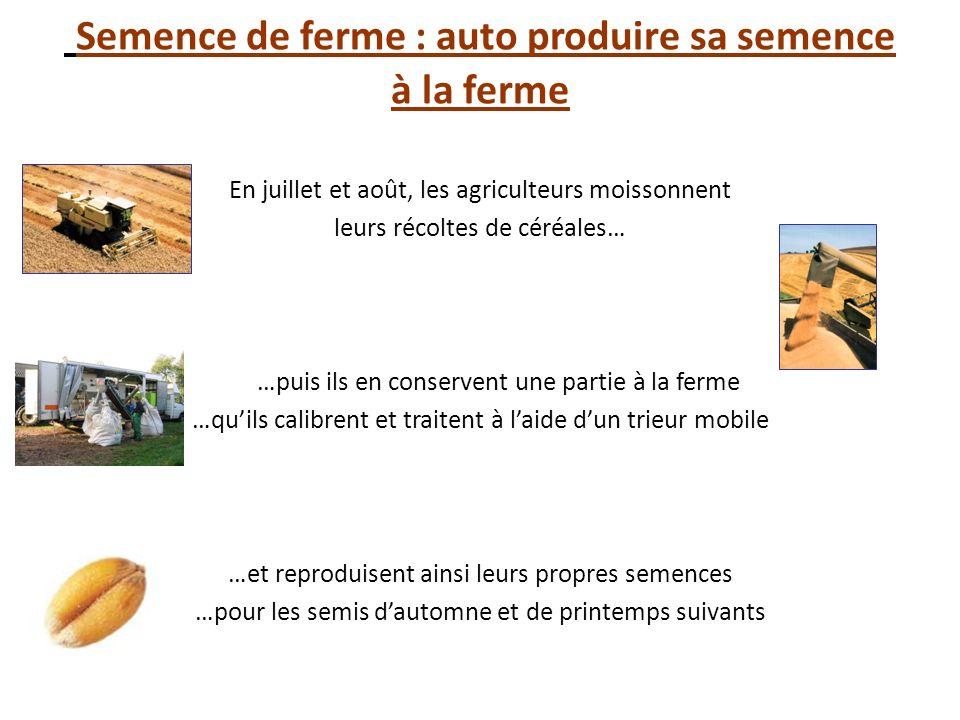 Semence de ferme : auto produire sa semence à la ferme