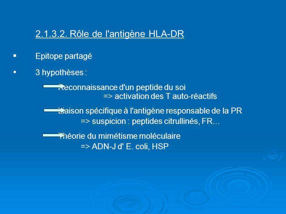 2. 1. 3. 2. Rôle de l antigène HLA-DR ▪. Epitope partagé ▪