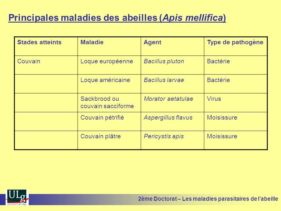 Principales maladies des abeilles (Apis mellifica)