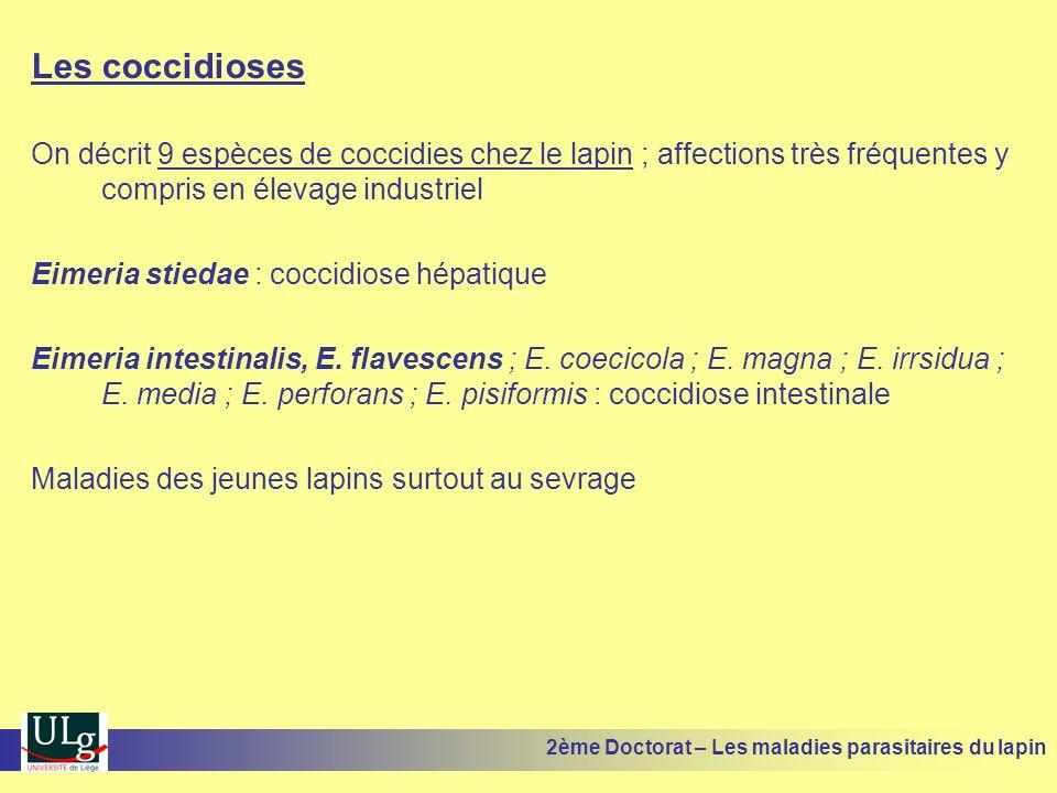 Les coccidioses On décrit 9 espèces de coccidies chez le lapin ; affections très fréquentes y compris en élevage industriel.