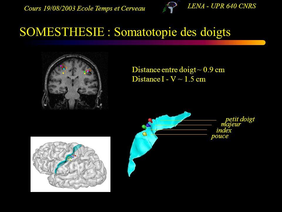 SOMESTHESIE : Somatotopie des doigts