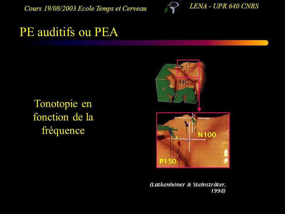 Tonotopie en fonction de la fréquence