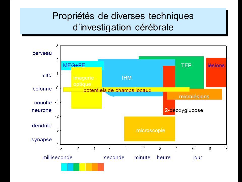 Propriétés de diverses techniques d'investigation cérébrale
