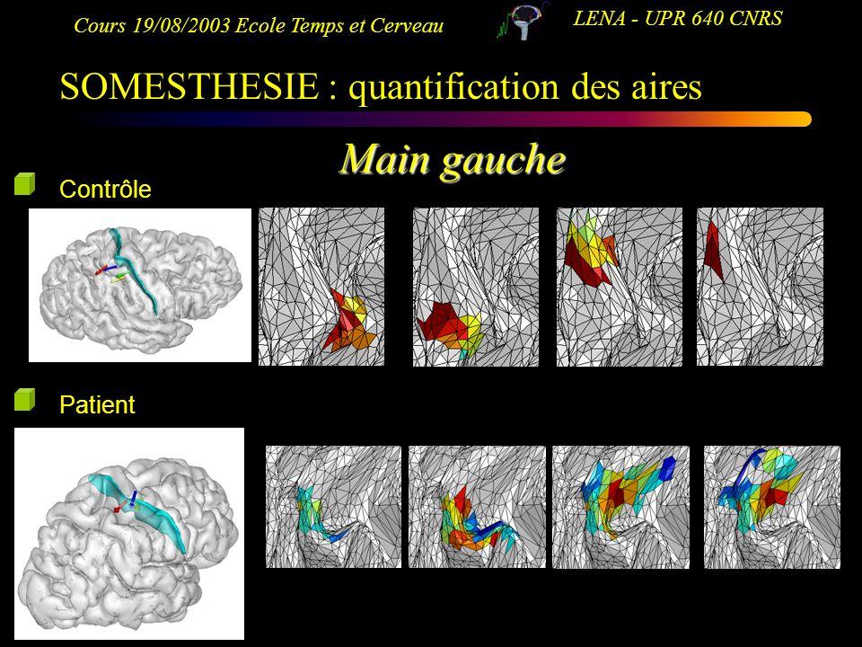 Main gauche SOMESTHESIE : quantification des aires Contrôle Patient