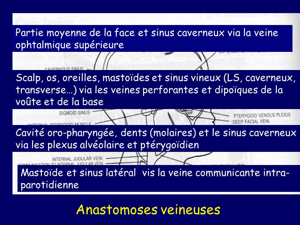 Anastomoses veineuses