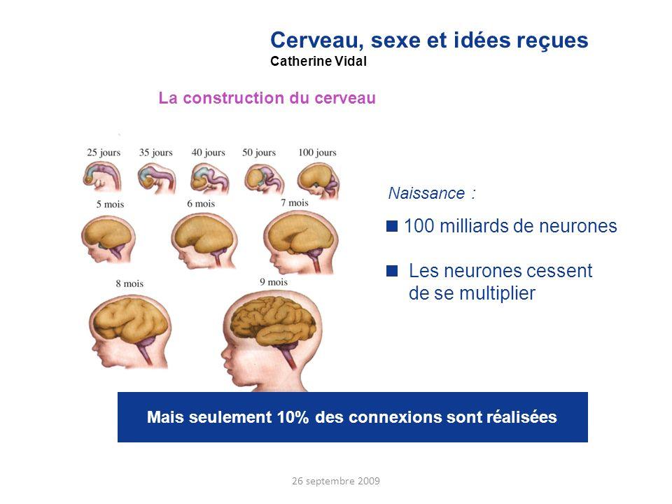 Cerveau, sexe et idées reçues
