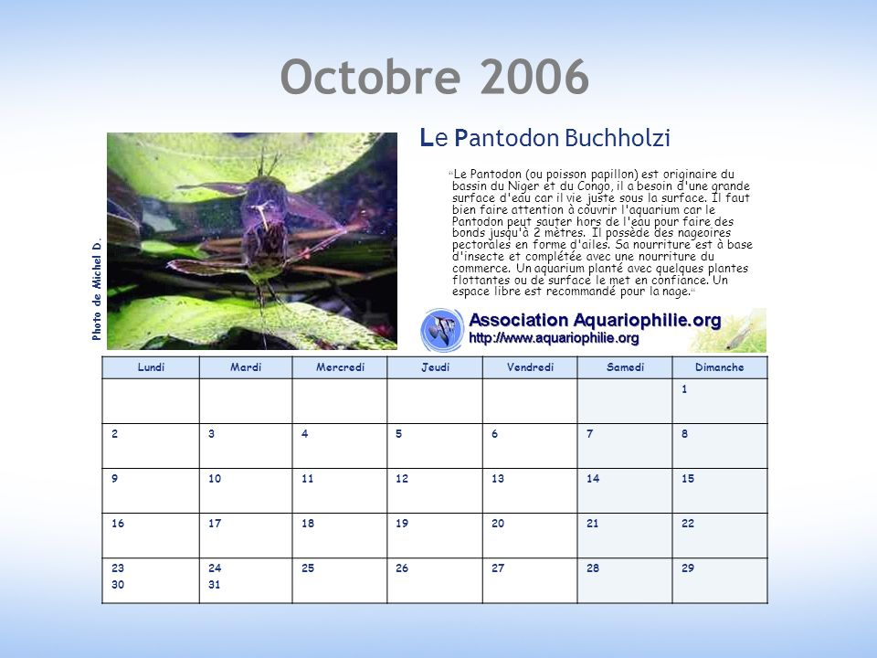 Octobre 2006 Le Pantodon Buchholzi