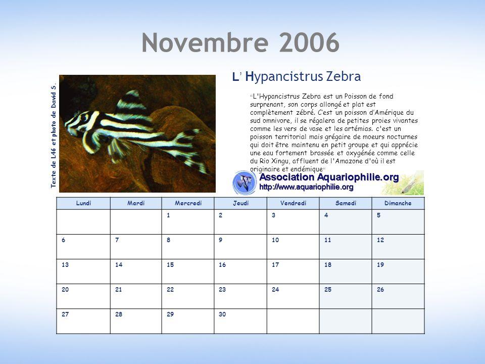 Novembre 2006 L' Hypancistrus Zebra