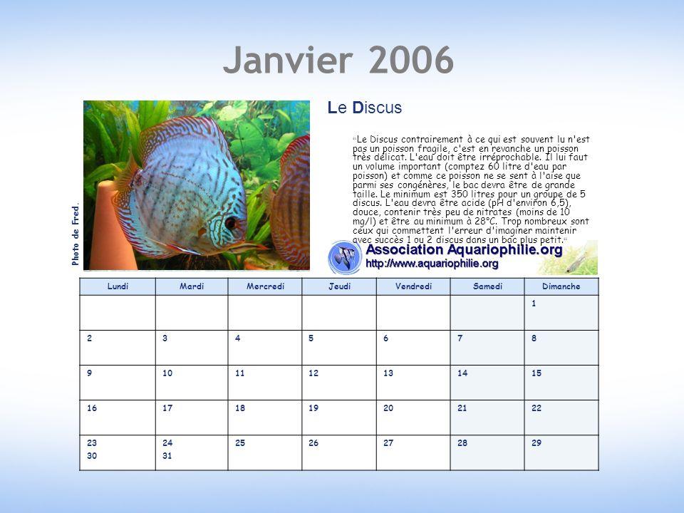 Janvier 2006 Le Discus.