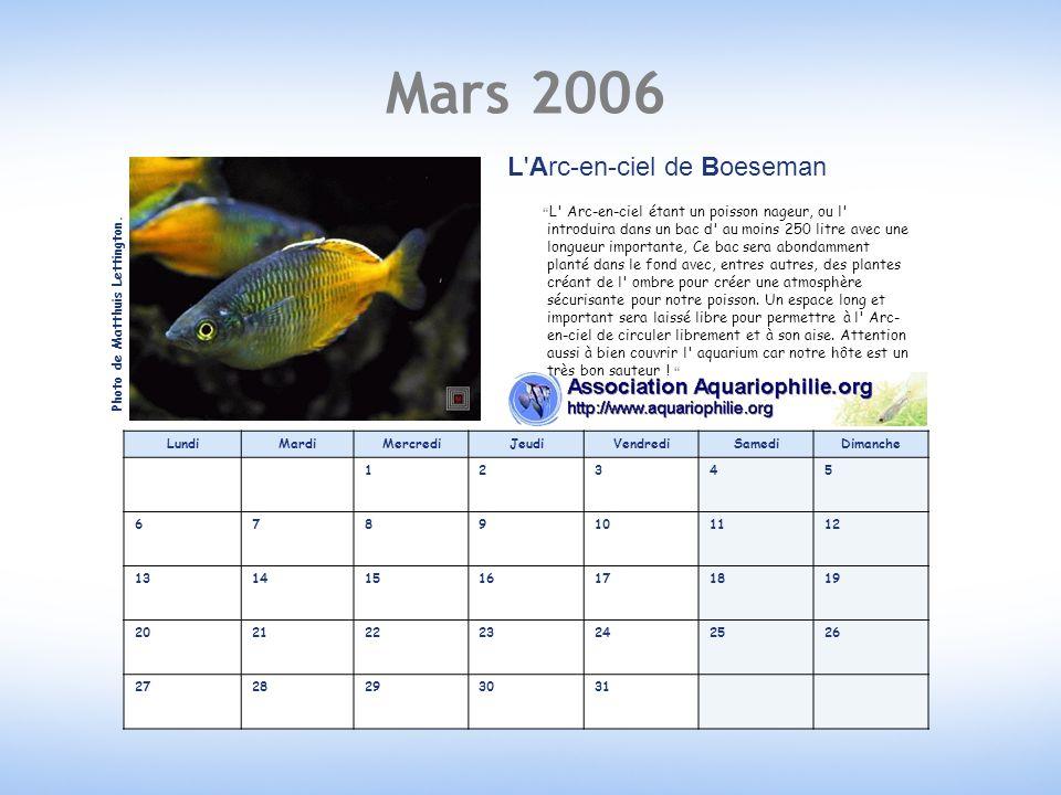 Mars 2006 L Arc-en-ciel de Boeseman