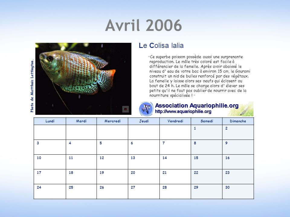 Avril 2006 Le Colisa lalia.