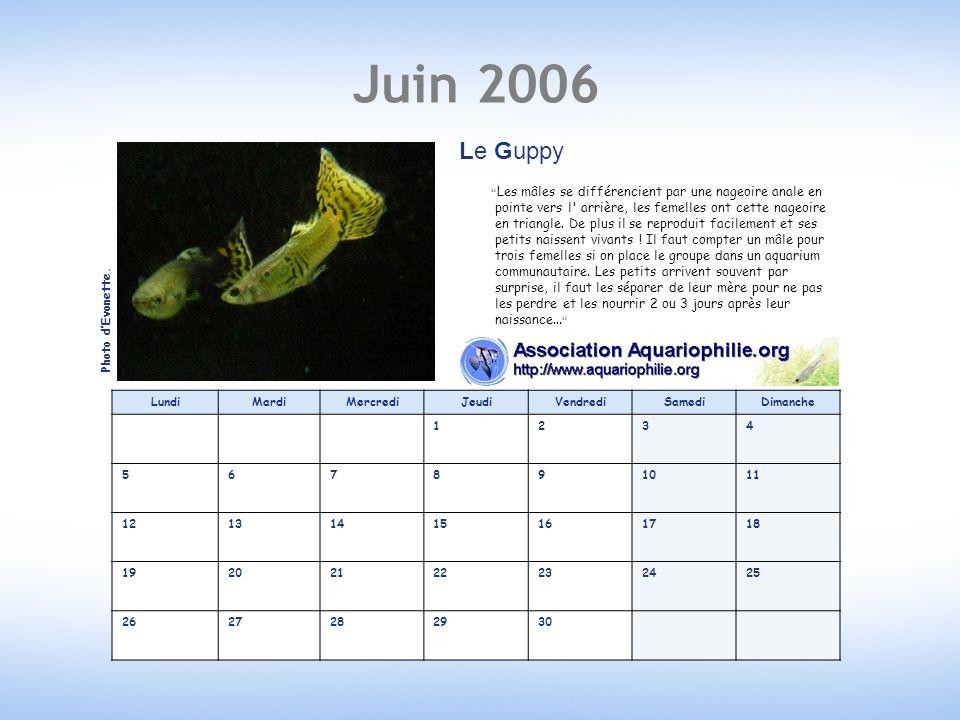 Juin 2006 Le Guppy.