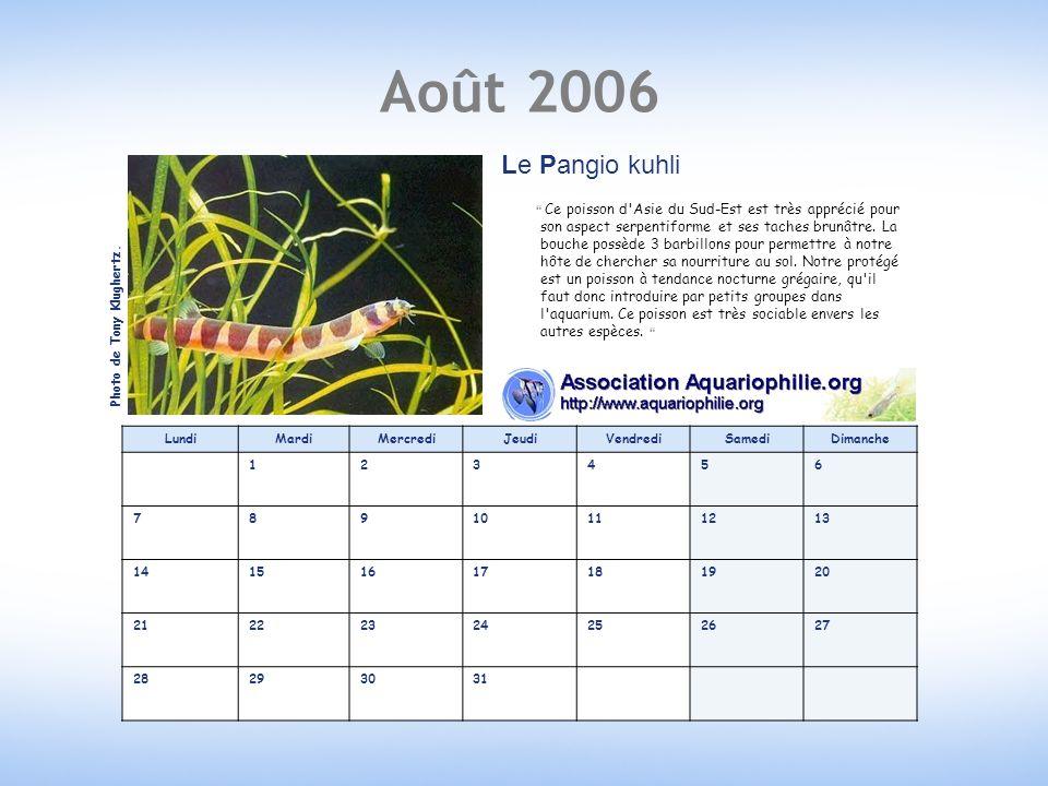 Août 2006 Le Pangio kuhli.