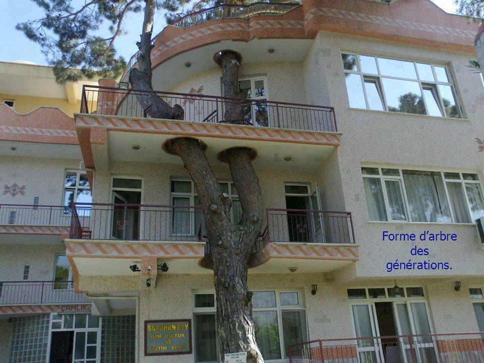 Forme d'arbre des générations.