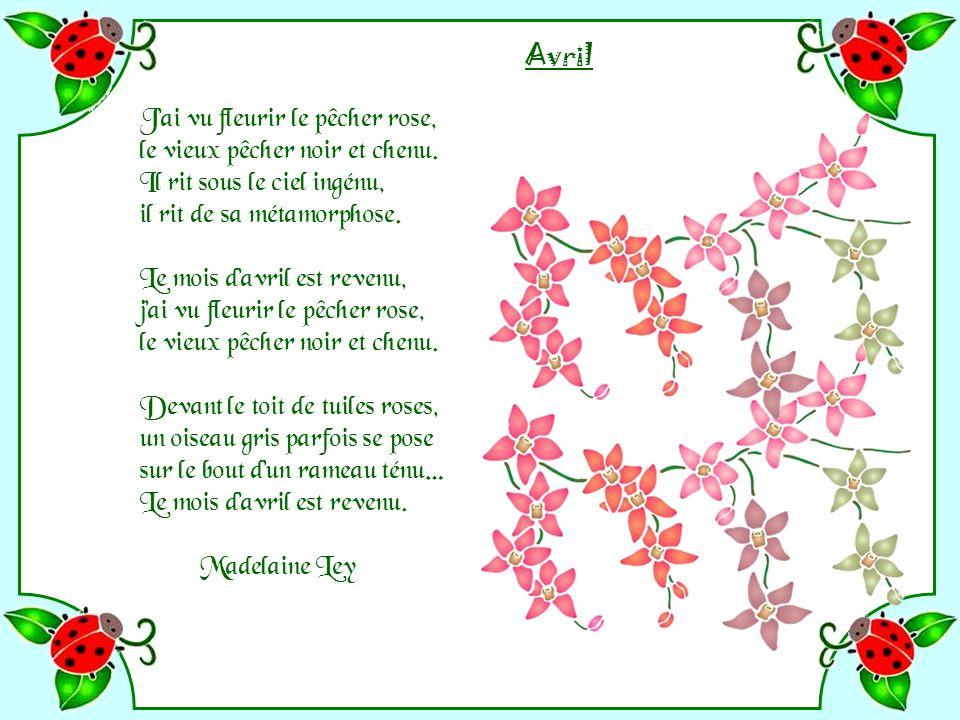 Avril J'ai vu fleurir le pêcher rose, le vieux pêcher noir et chenu. Il rit sous le ciel ingénu, il rit de sa métamorphose.