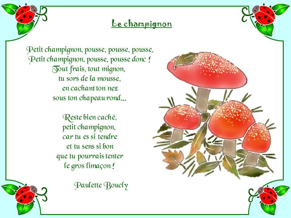 Petit champignon, pousse, pousse, pousse,