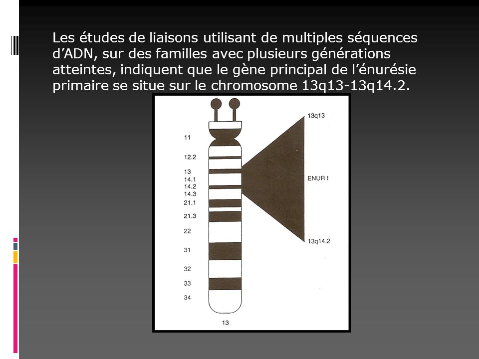 Les études de liaisons utilisant de multiples séquences d'ADN, sur des familles avec plusieurs générations atteintes, indiquent que le gène principal de l'énurésie primaire se situe sur le chromosome 13q13-13q14.2.