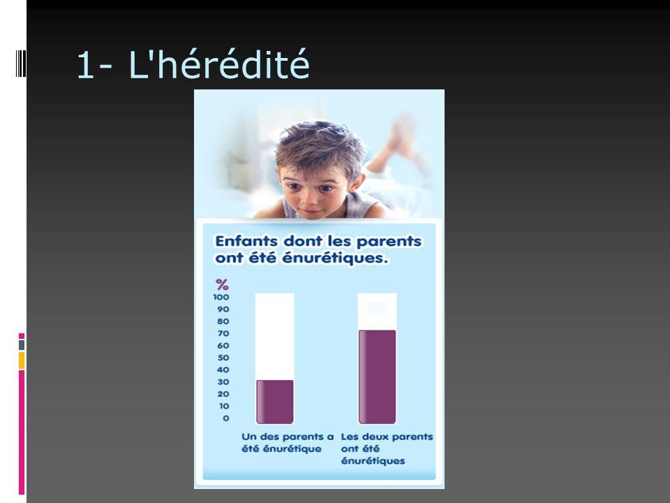 1- L hérédité