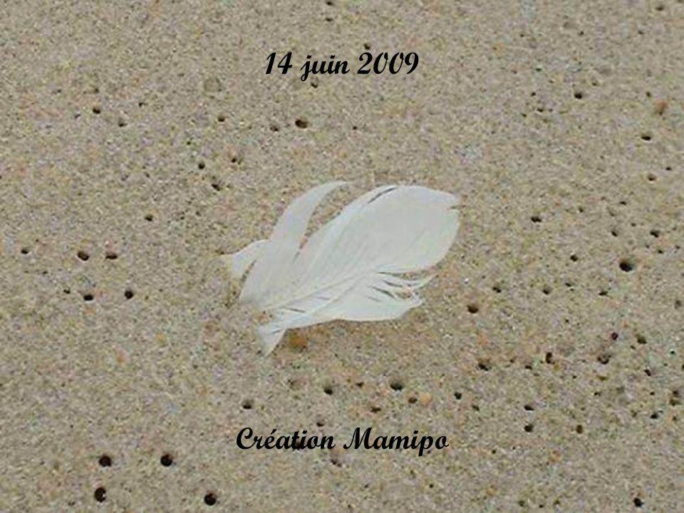 14 juin 2009 Création Mamipo