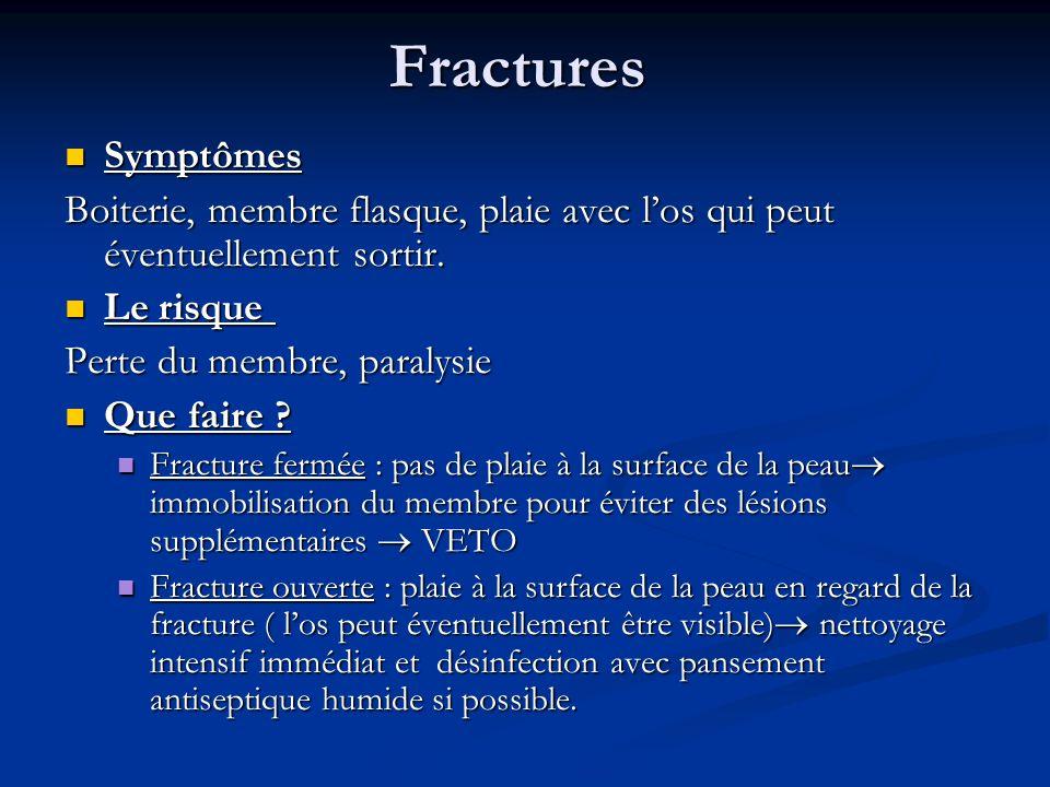 Fractures Symptômes. Boiterie, membre flasque, plaie avec l'os qui peut éventuellement sortir. Le risque