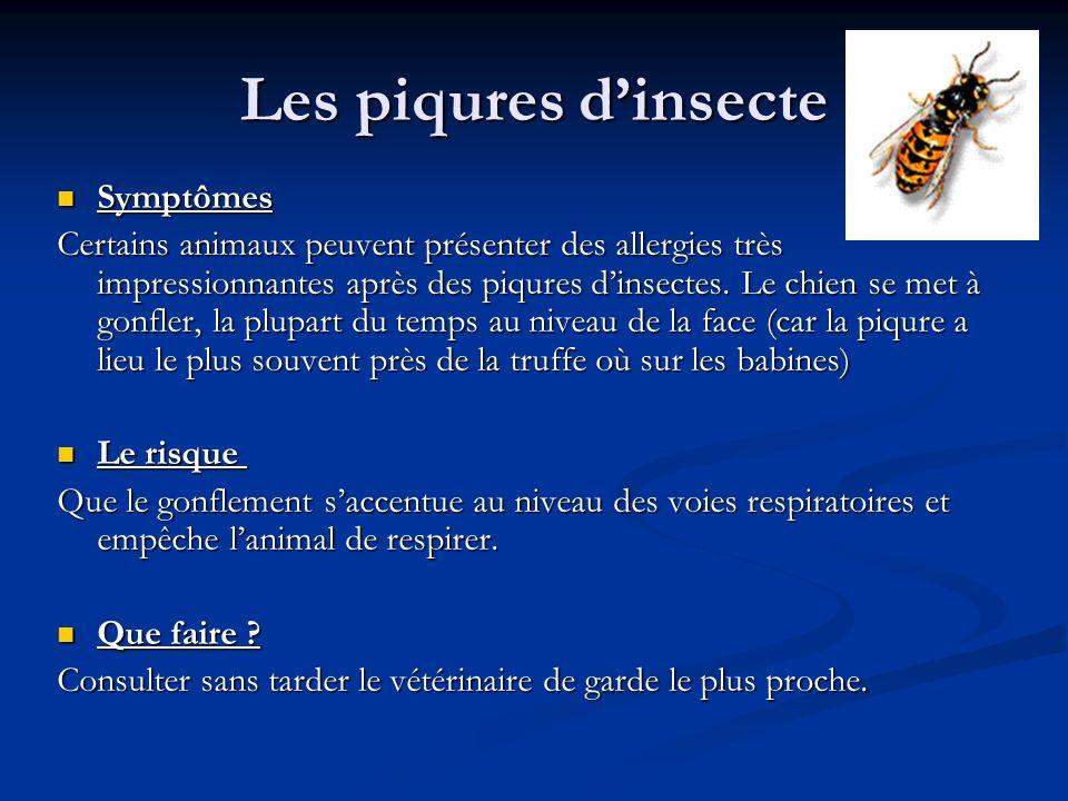 Les piqures d'insecte Symptômes