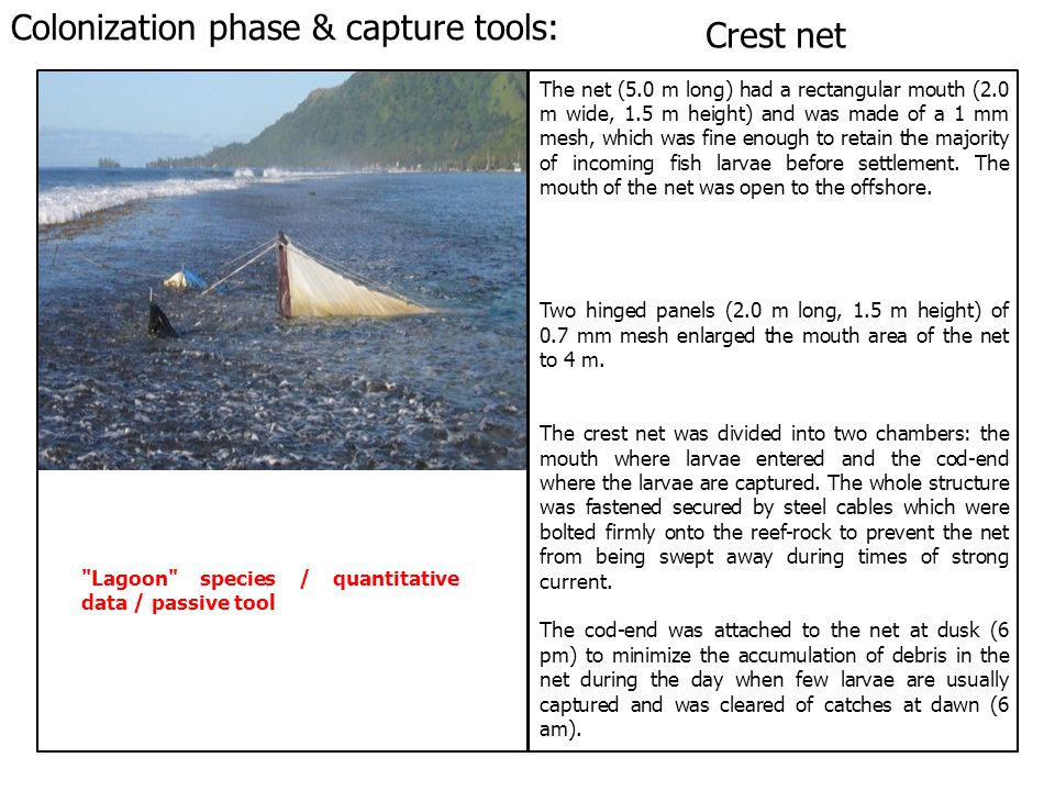 Colonization phase & capture tools: Crest net