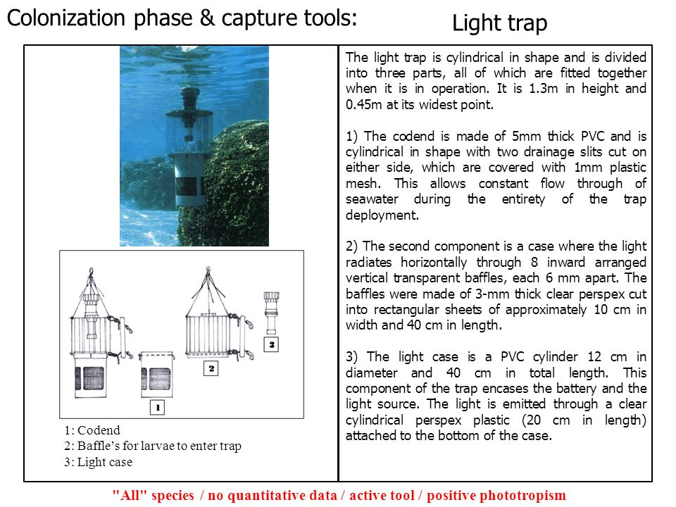 Colonization phase & capture tools: Light trap
