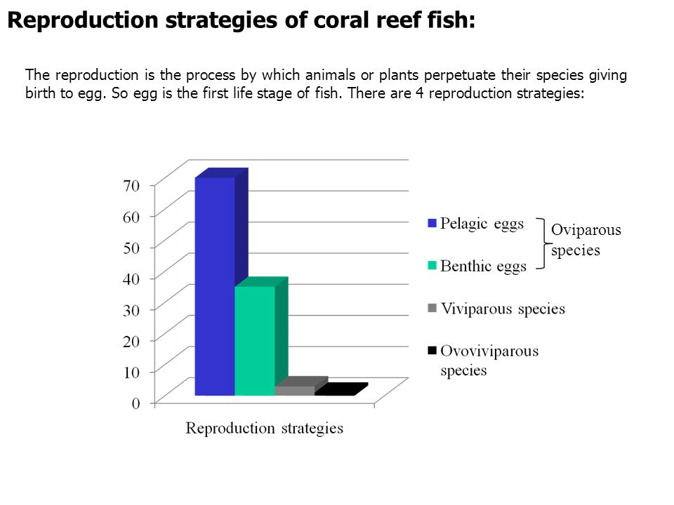 Reproduction strategies of coral reef fish: