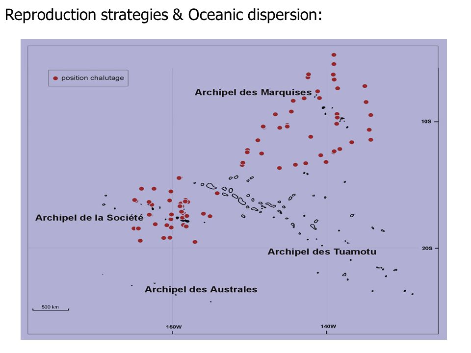 Reproduction strategies & Oceanic dispersion: