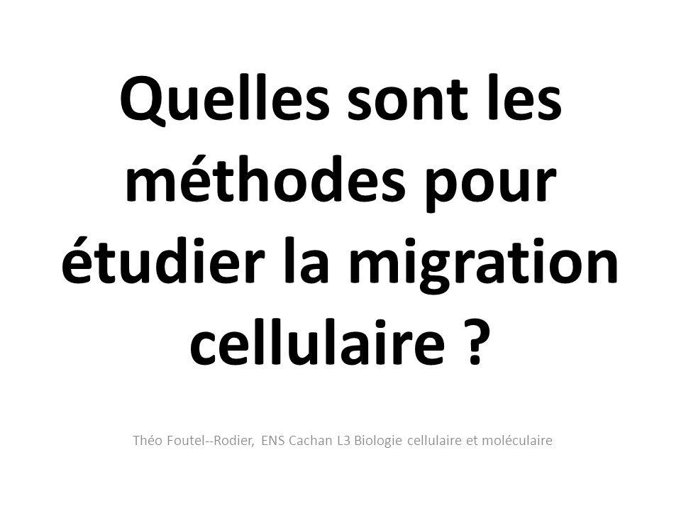 Quelles sont les méthodes pour étudier la migration cellulaire