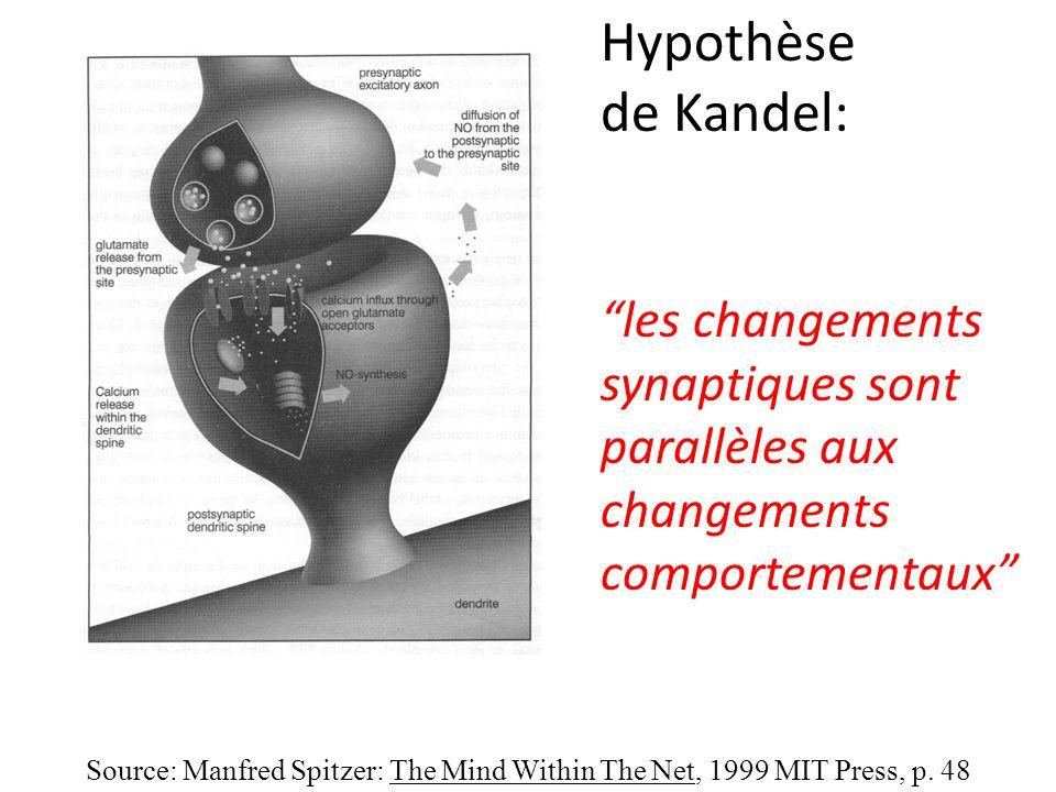 Hypothèse de Kandel: les changements synaptiques sont parallèles aux
