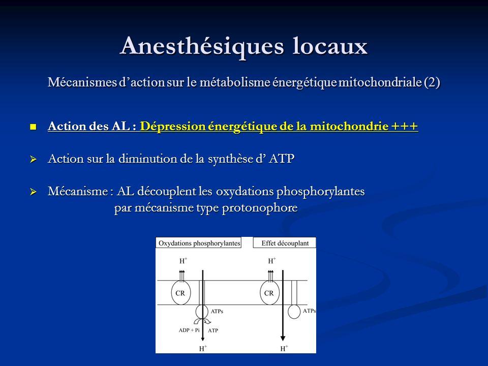 Anesthésiques locaux Mécanismes d'action sur le métabolisme énergétique mitochondriale (2)