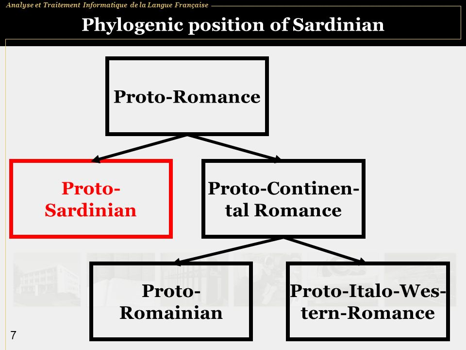 Phylogenic position of Sardinian