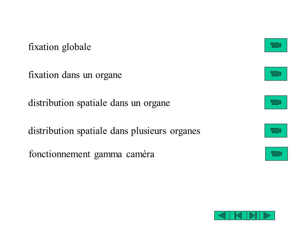 fixation globale fixation dans un organe. distribution spatiale dans un organe. distribution spatiale dans plusieurs organes.
