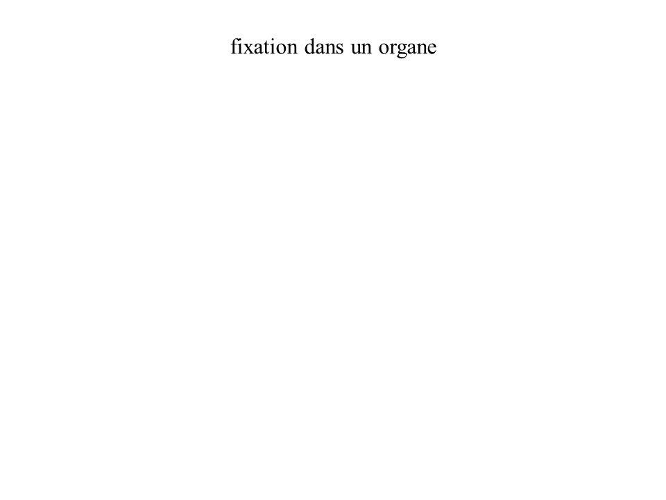 fixation dans un organe